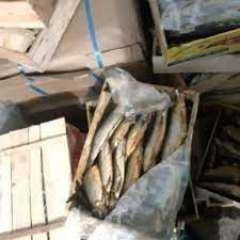 بيطري الشرقية يضبط 9 طن و 764 كجم جمبري منتهي الصلاحية خلال حملة تفتيشية بمركز بلبيس