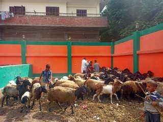 الزراعة: فحص وعلاج أكثر من 5400 حيوان مجانا بمحافظة المنيا